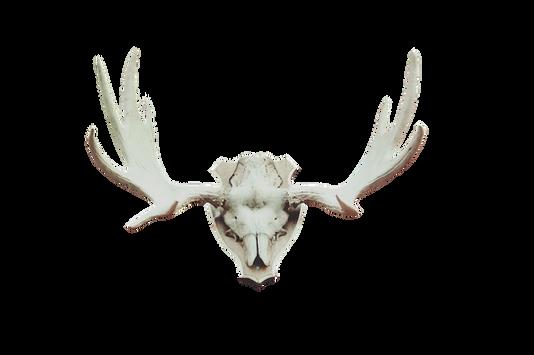 PNG images: skull