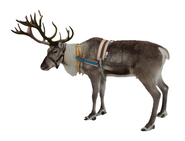 Reindeer, free PNG collection