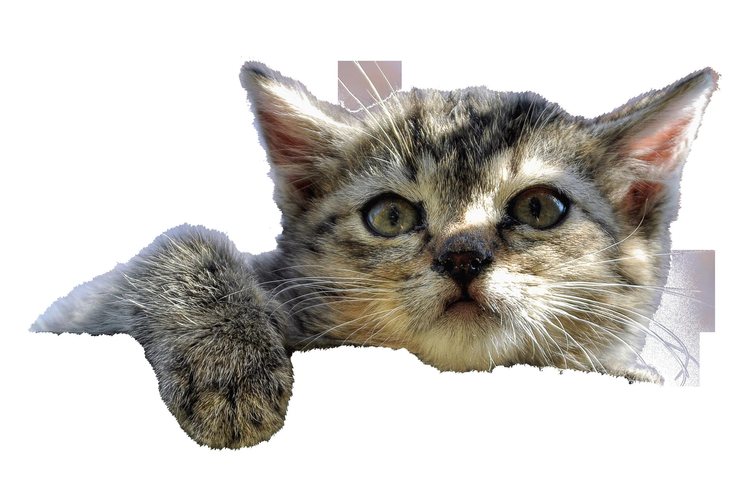 cat-1186532_Clip