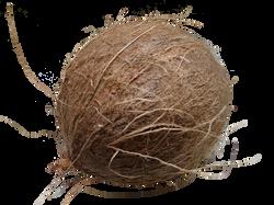 coconut-60391_Clip