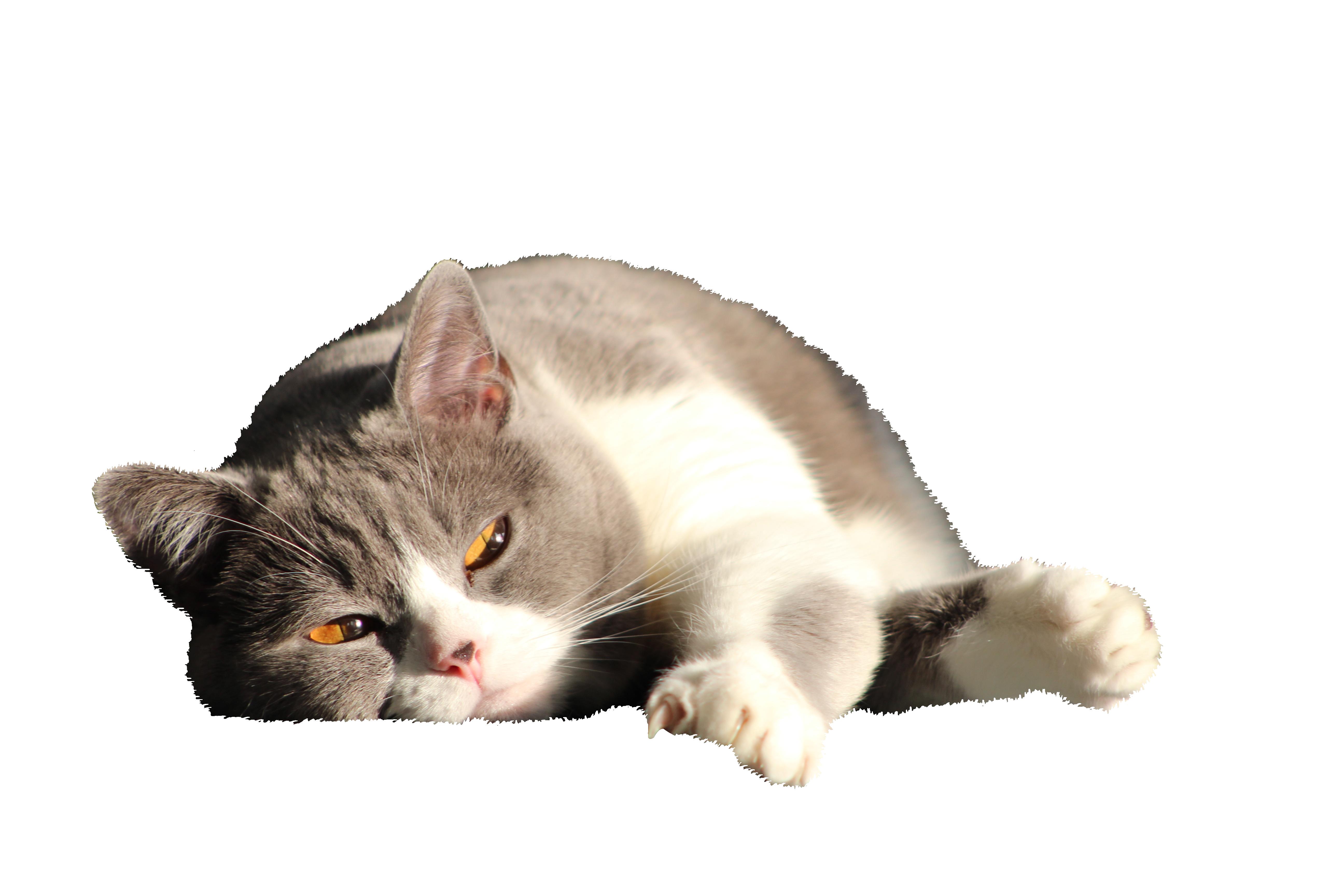 cat-916043_Clip