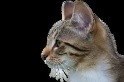cat-941319_Clip