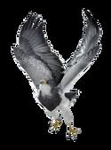 PNG images: Eagle