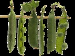 vegetables-836823_Clip