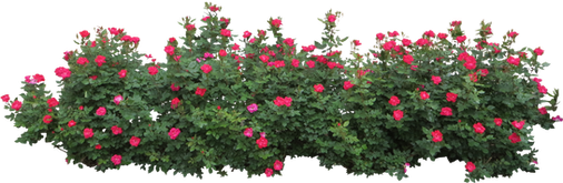 bush, free PNGs
