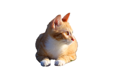 cat-1196260_Clip