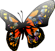 butterfly-146165__340.png