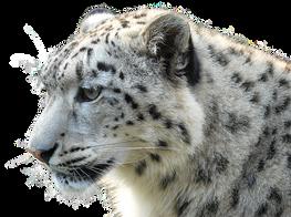 leopard-2396152__340.png