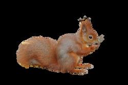 the-squirrel-212560_Clip