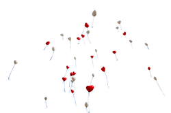 balloon-1046658_Clip