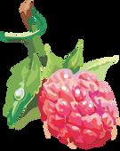 Raspberry PNG
