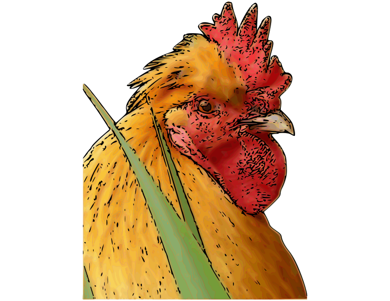 Rooster (1)
