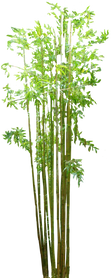 Bamboo (4).png