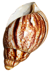 shell-2479673__340.png