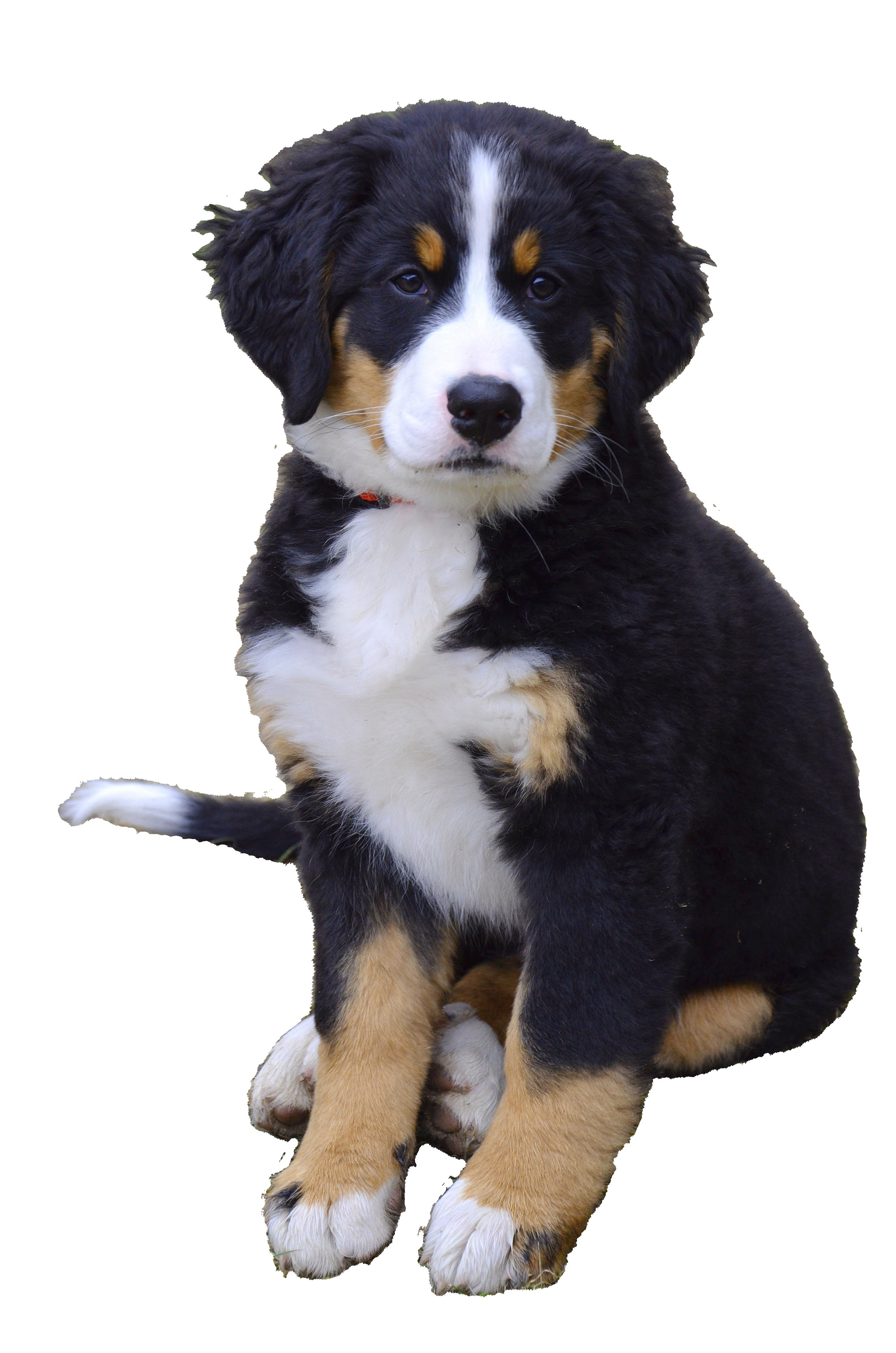 puppy-1192131_Clip