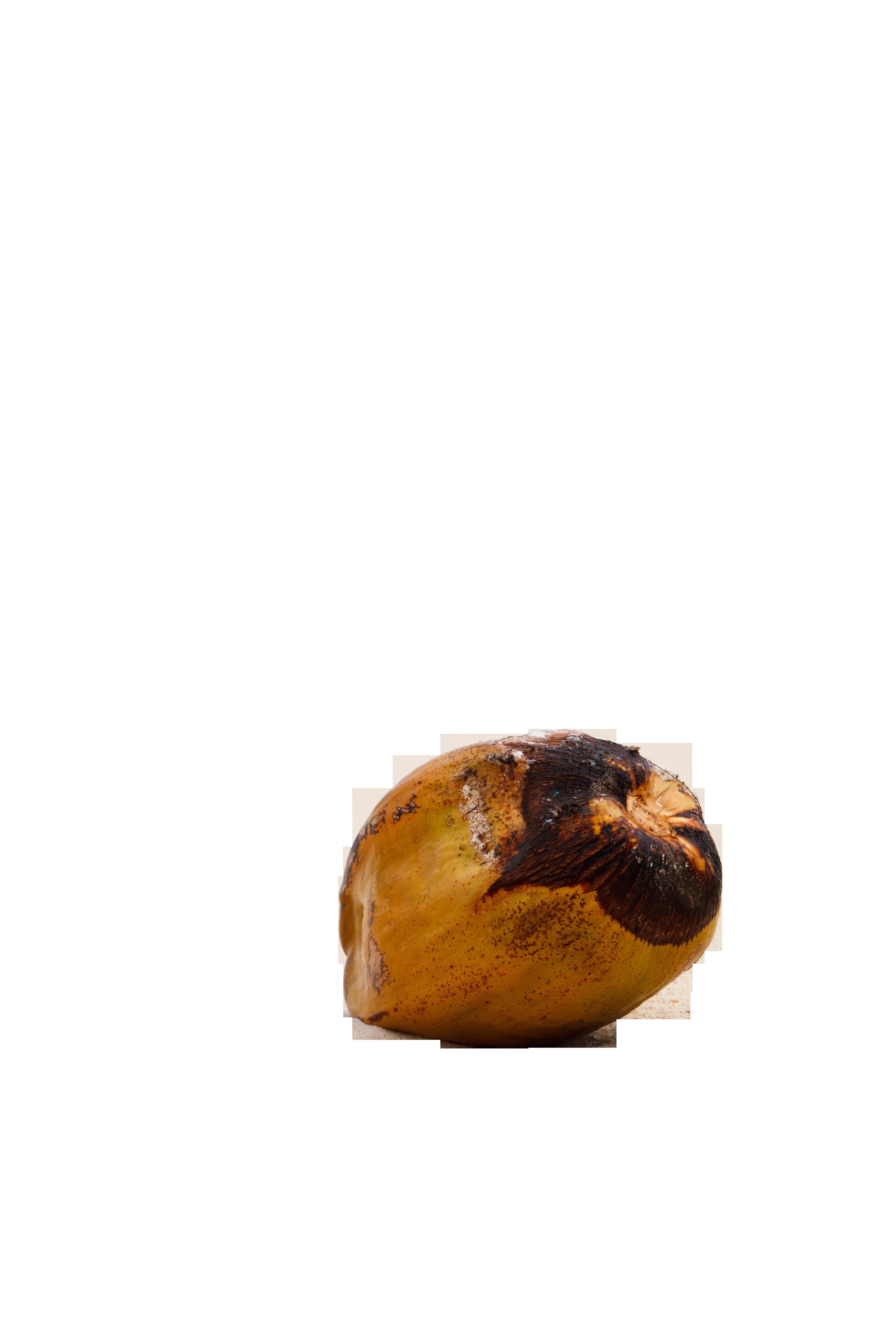 coconut-84539_Clip