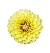 flower-1857996__340.png