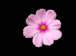 ornamental-plant-1229046_Clip