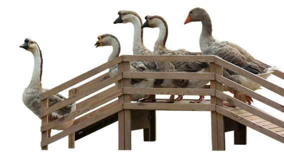 geese-2964114_960_720.png