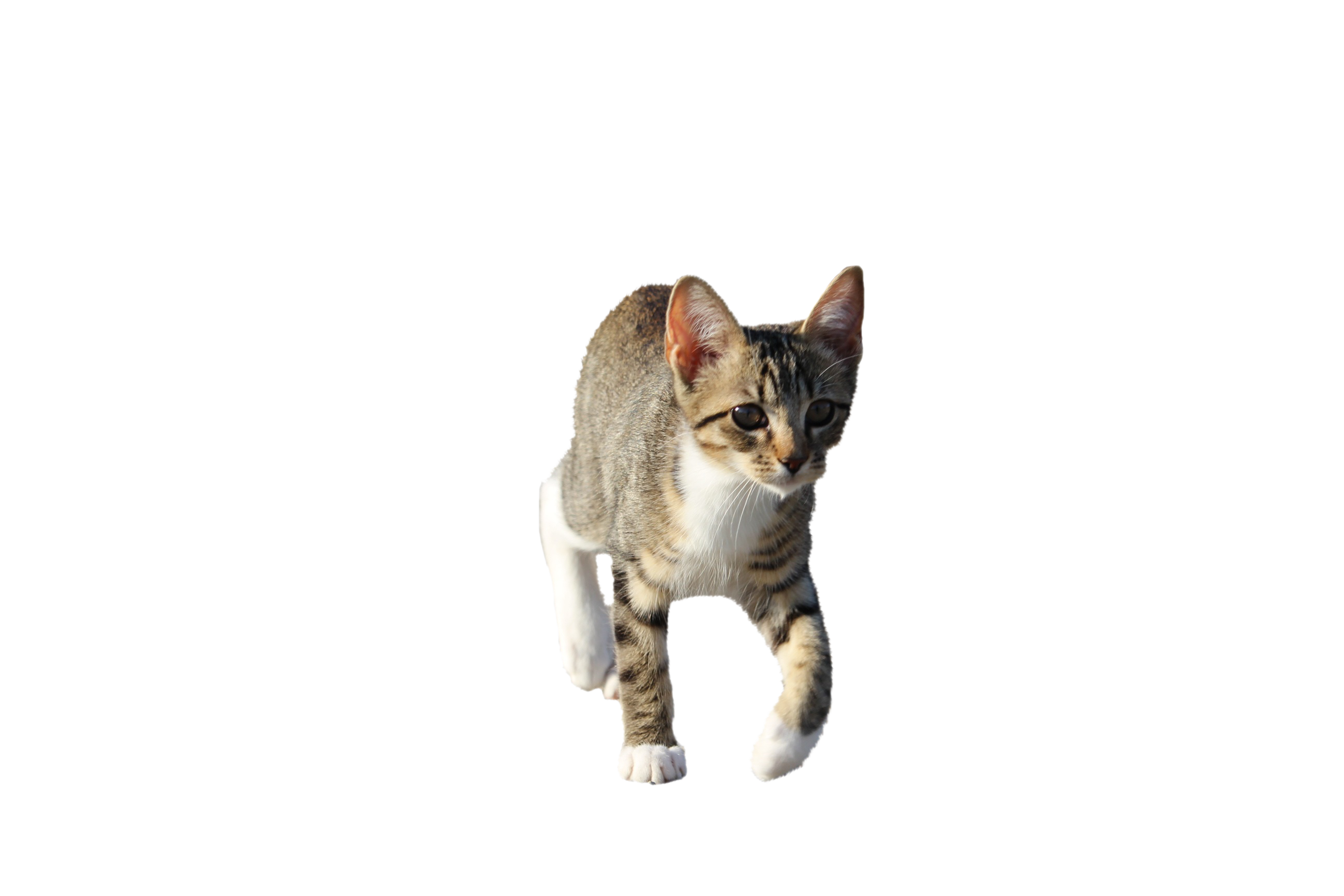 cat-911190_Clip