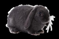 rabbit-694919_Clip