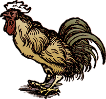 rooster-1043624__340.png