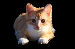 cat-1196267_Clip
