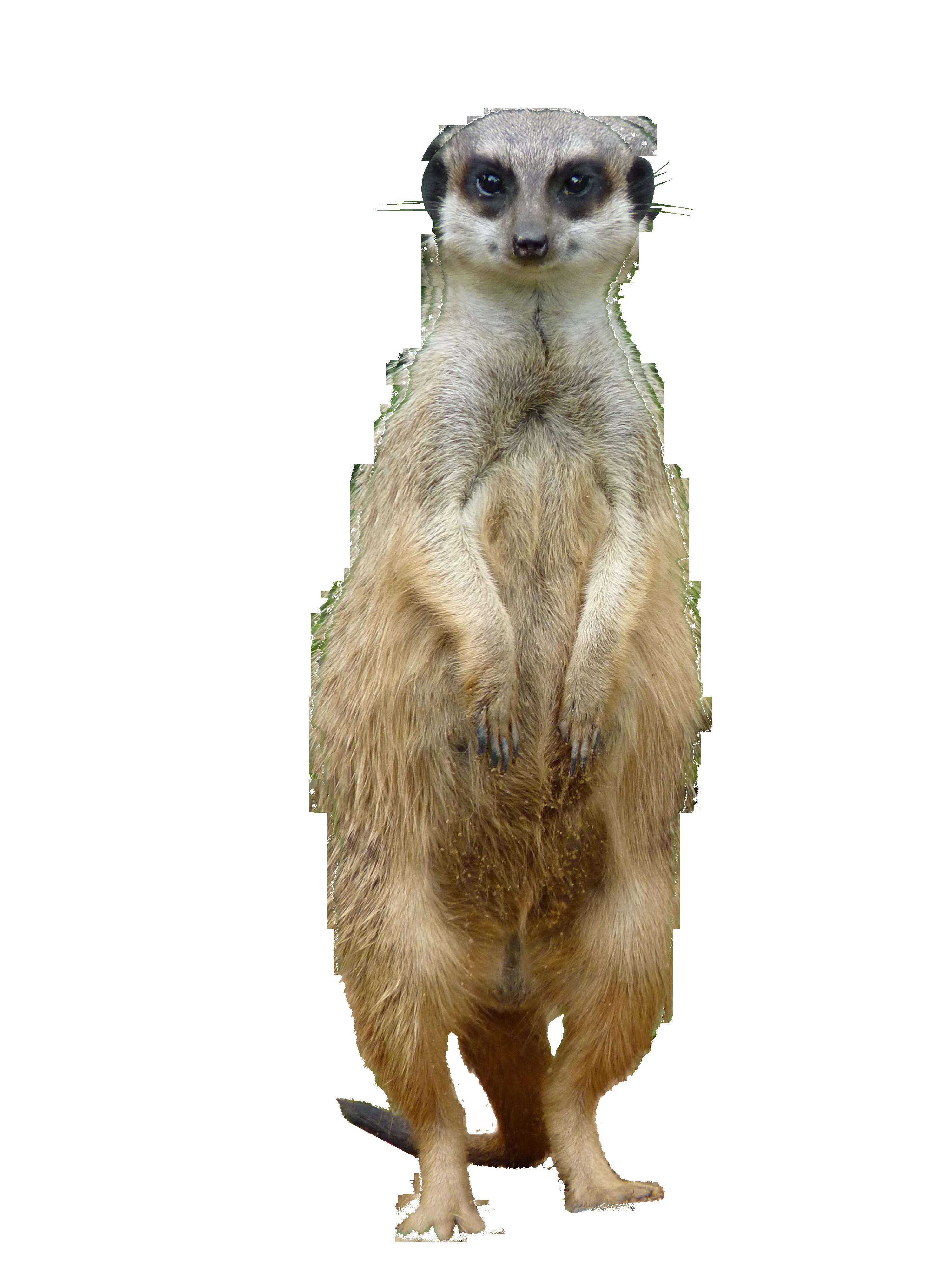 meerkat-854590_Clip