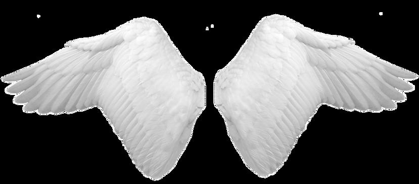 Wings-png-43