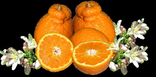 mandarin-3334762_960_720.png