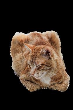 cat-986573_Clip