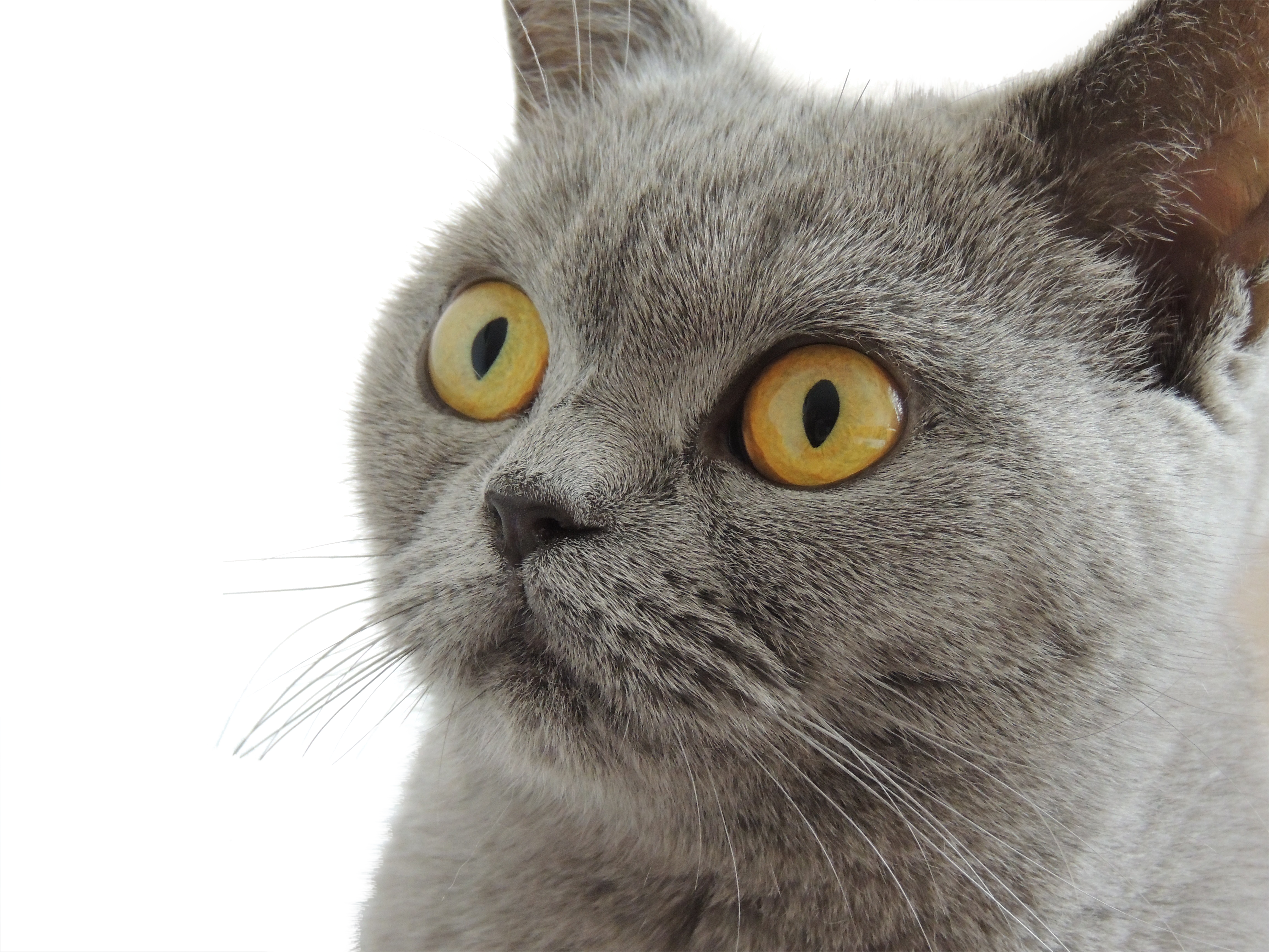 cat-179842_Clip