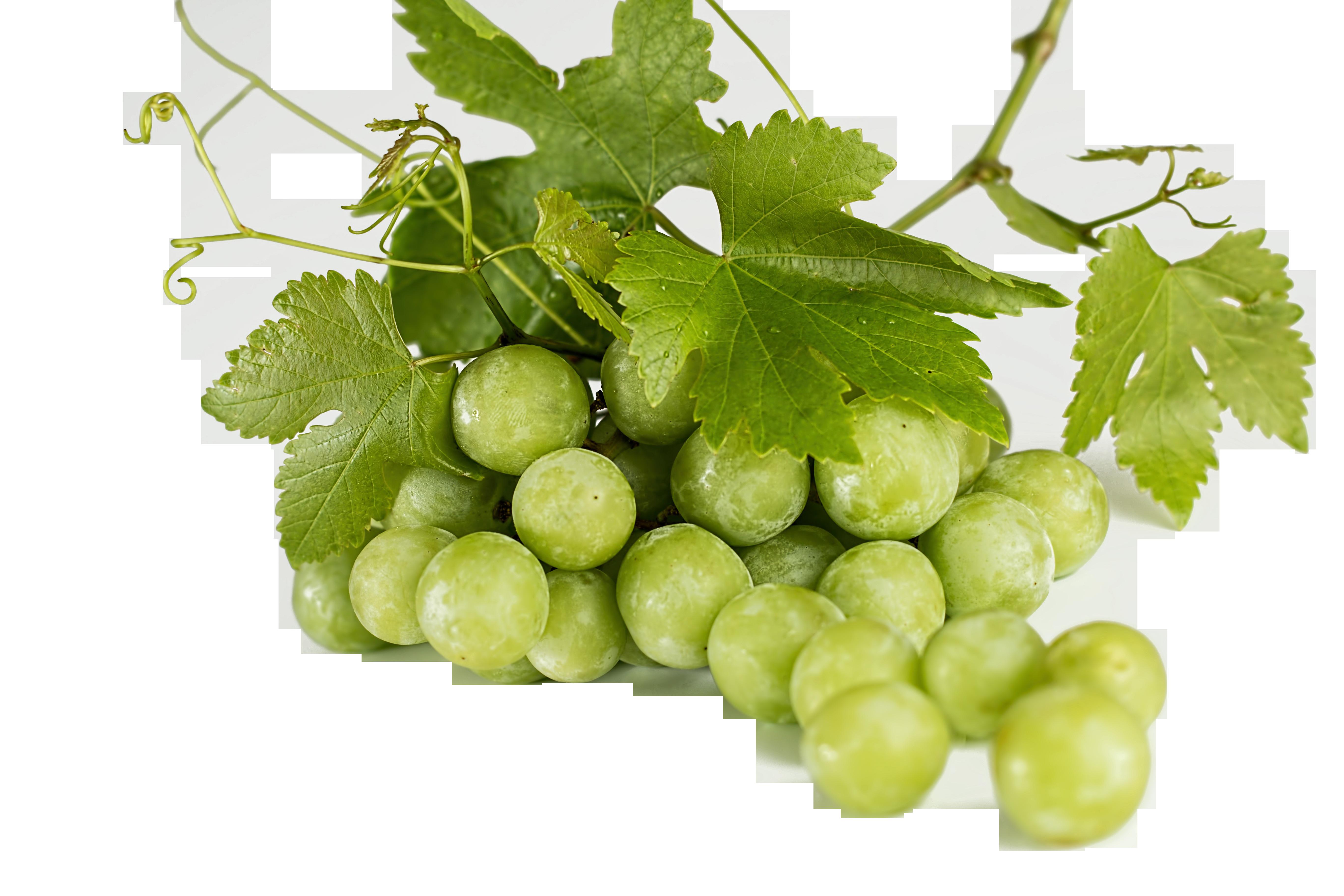 grapes-582207_Clip