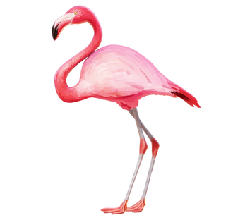 Free png flamingo images.
