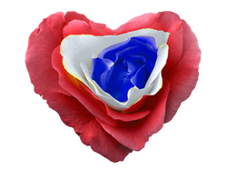 heart-1190203_Clip