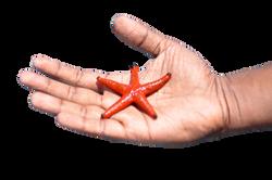 starfish-1198230_Clip