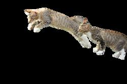 cat-912291_Clip
