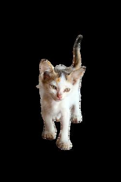 cat-1028279_Clip