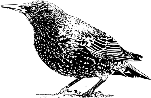 animal-1295607__340