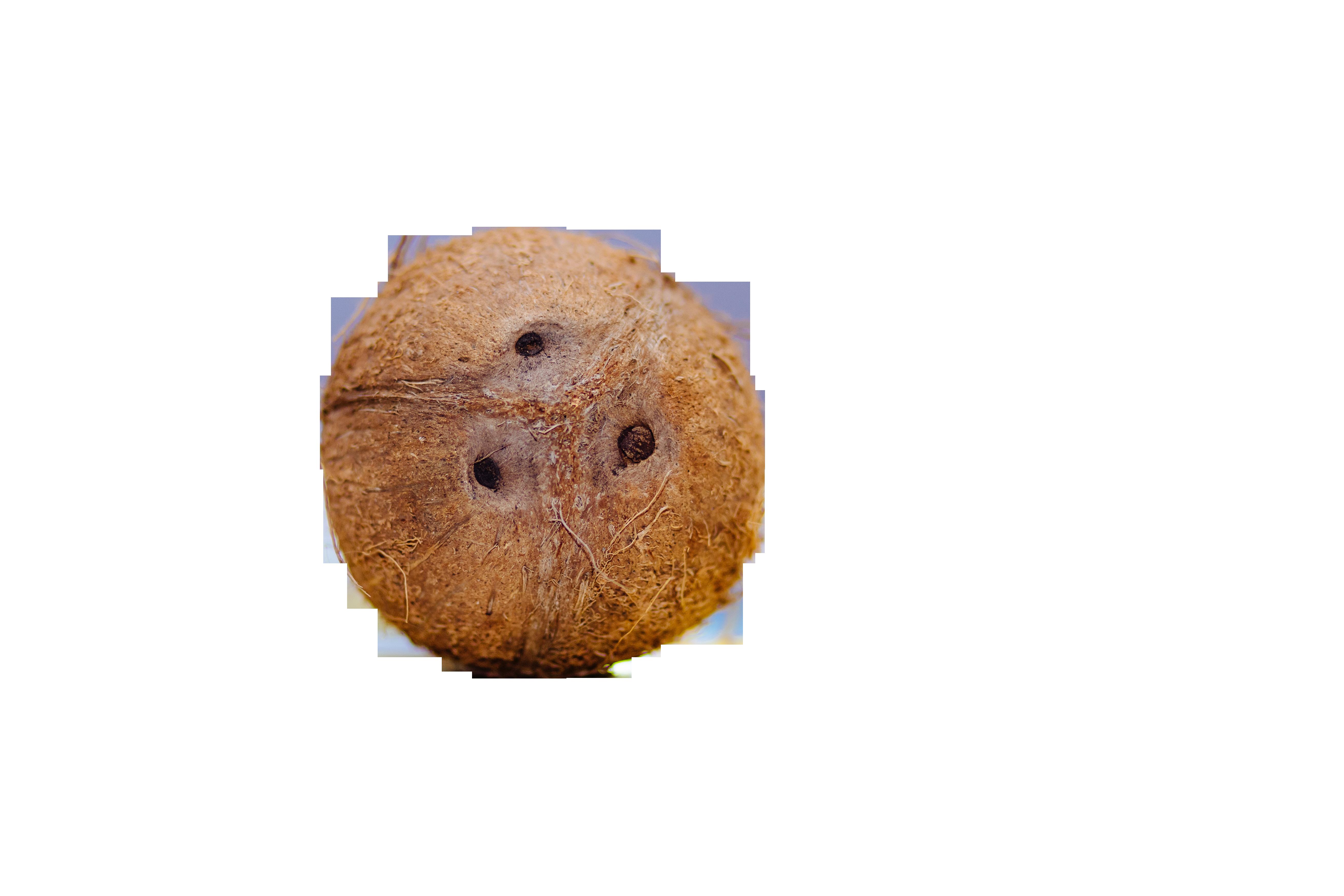 coconut-933310_Clip