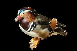 bird-1037813_Clip