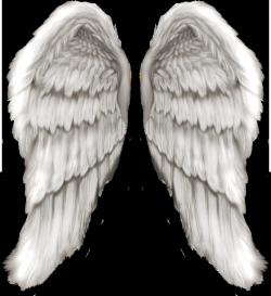 Wings-png-30