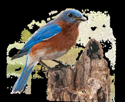 bluebird-2080681_960_720.png