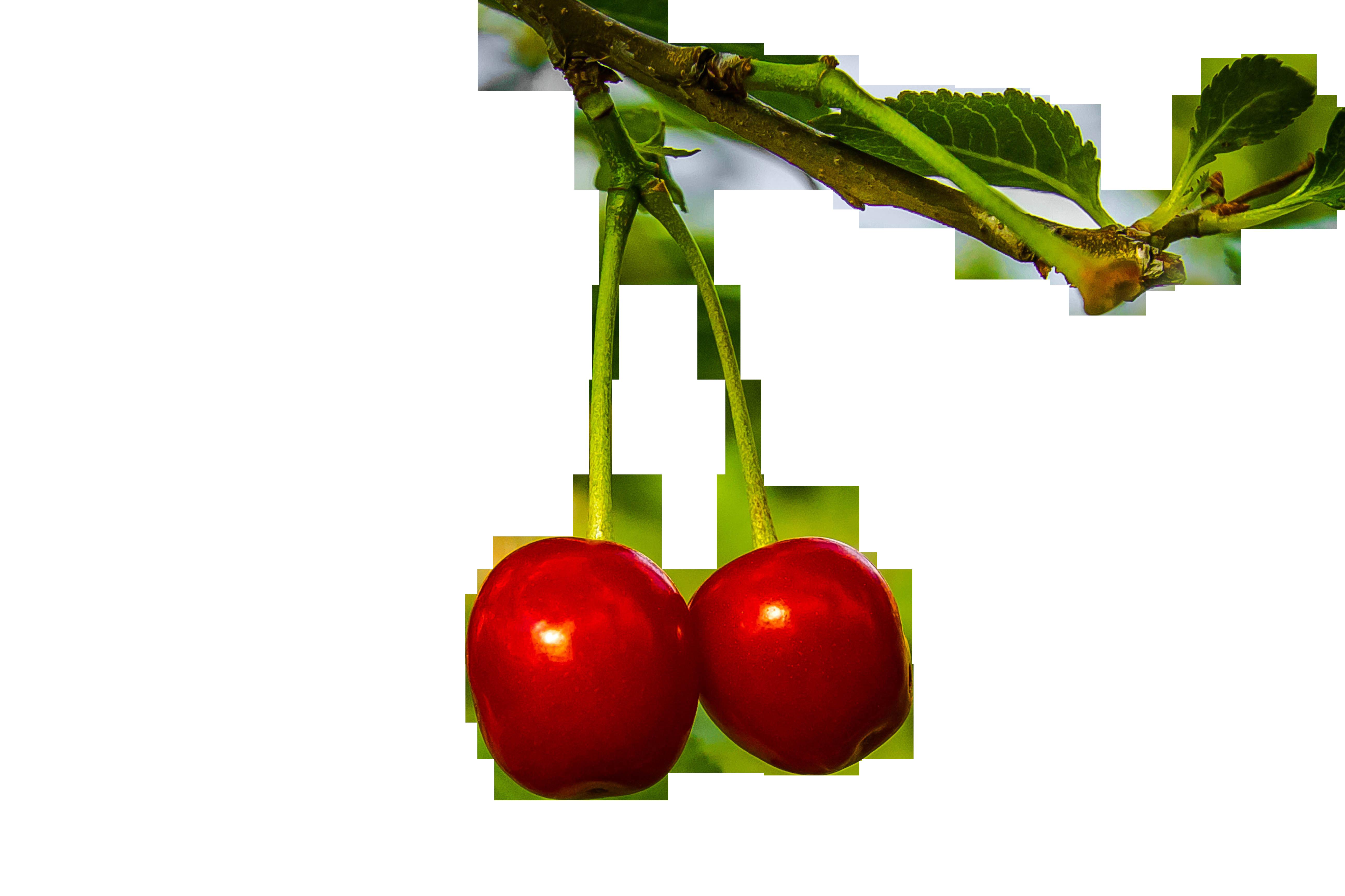 cherries-954400_Clip