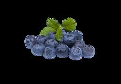 blueberry-873784_Clip