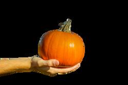 pumpkin-973238_Clip