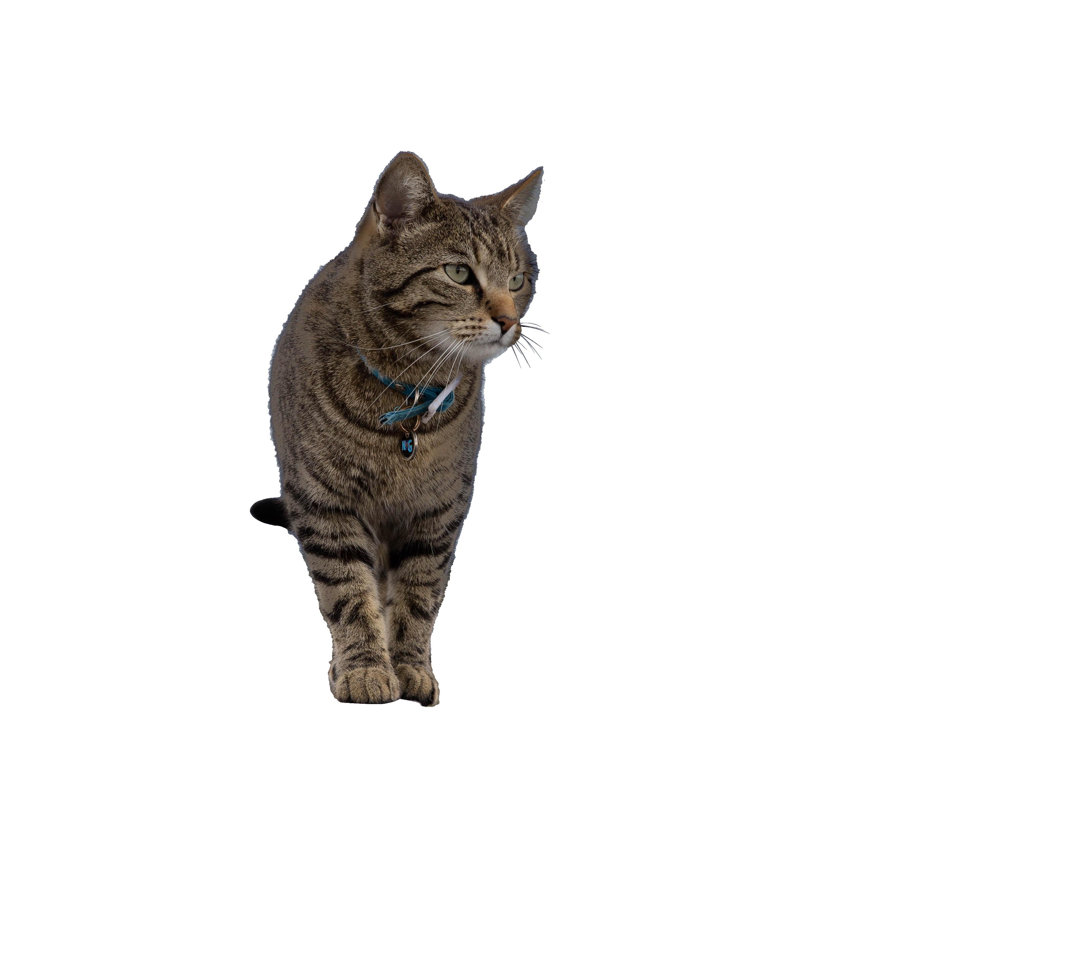 cat-833983_Clip