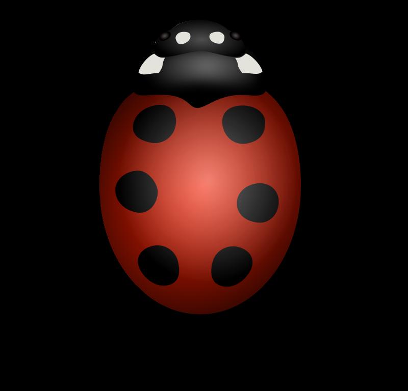 LadybugII