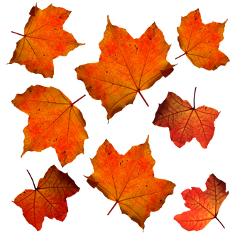 fall-331485_960_720.png