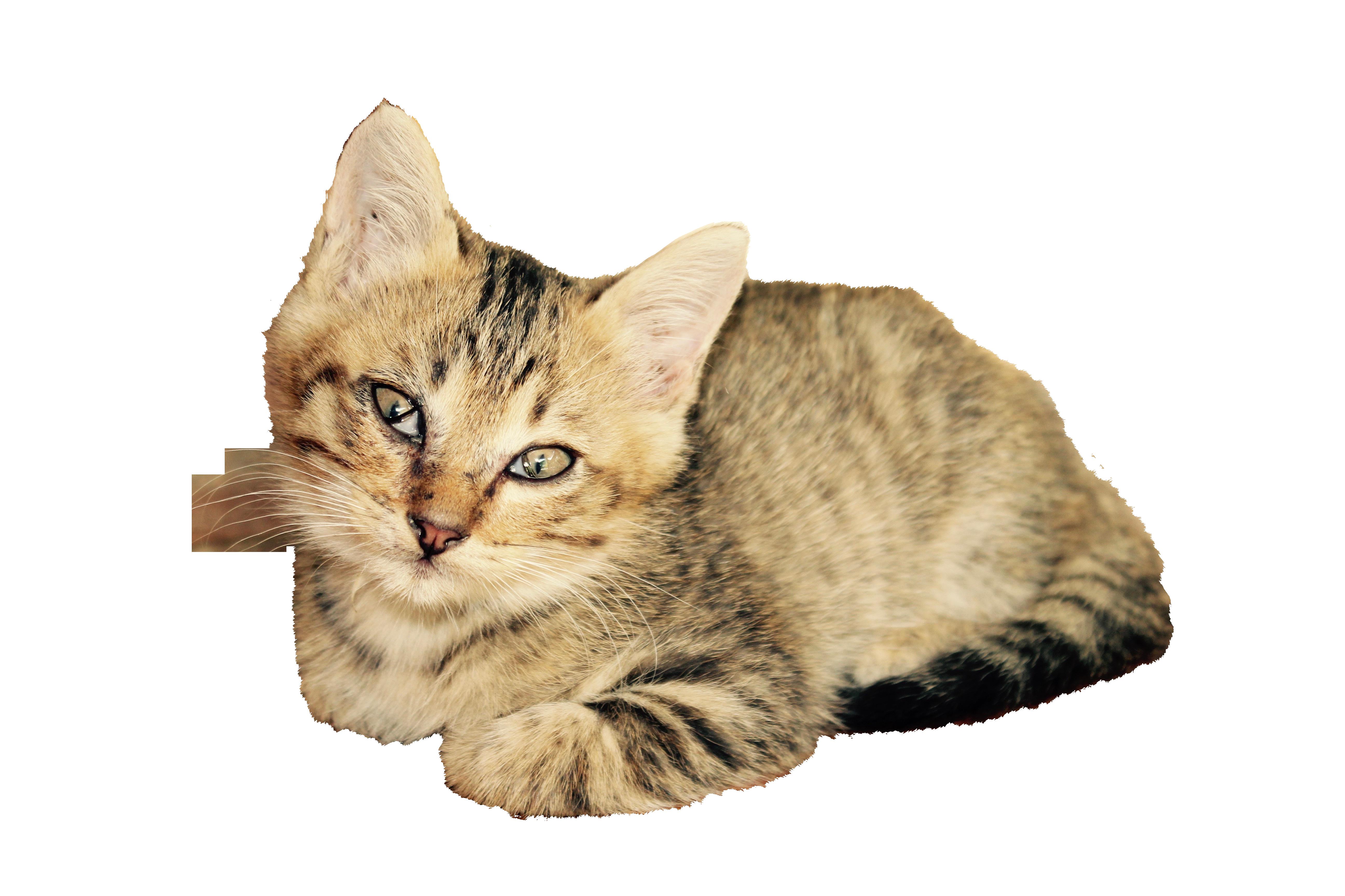 cat-1189843_Clip